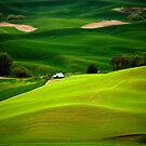 Green Fields by Olga Zvereva