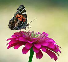The Lady Loves Pink by Brenda Burnett