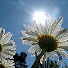 ~ You Are My Sunshine ~ by Brenda Boisvert