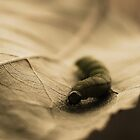 life on a leaf by Ingz