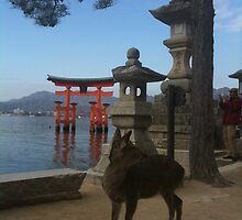deer under the pine tree, Miyajima, japan by Ljikob