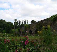 Roses and Ragworth at Glanworth Bridge,Co.Cork,Ireland. by Pat Duggan