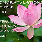 feature banner of waterlilly group by Manon Boily