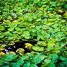 Monet by Xmetal
