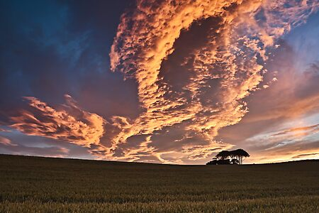 Cornfield Sunset - County Durham, UK