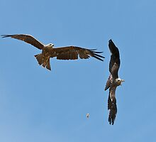 Red Kites Feeding - Cotswold Falconry Centre, England by Sue Earnshaw