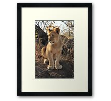 I'll grow into these paws.....! Framed Print
