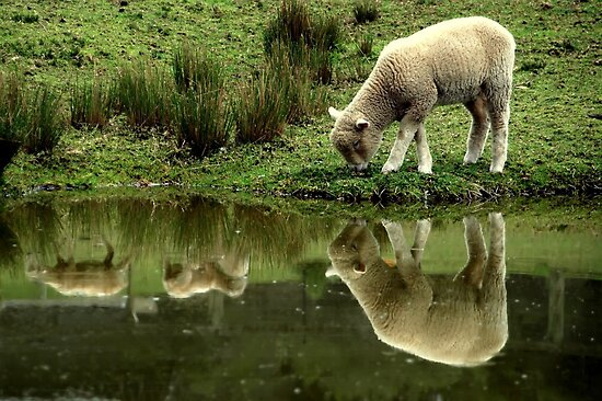 ~Reflections: Down on the Farm~ by a~m .