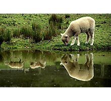 ~Reflections: Down on the Farm~ Photographic Print