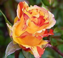 Rose Bud .. Oranges and Lemons by LoneAngel