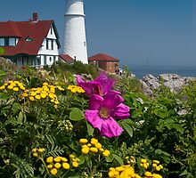 Beach Rose at Portland Head by hawkeye978