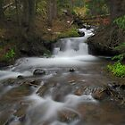 Venable Creek Cascades by Bill Hendricks