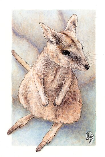 Rock wallaby (watercolour) by Laura Grogan
