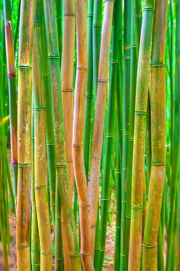 Bamboo Rods by Jessica Veltri