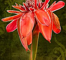 Kym's Red Torch Ginger by Craig Hender