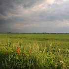 Storm in the Fens by Rachel Slater