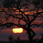 African sunset by jozi1