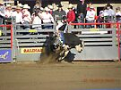 Bull Riding Twist by Sandra Gray