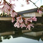 Blossom - Imperial Palace Gardens, Tokyo by Helen Barnett