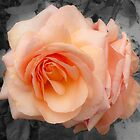 A Rose by Any Other Name by Helen Barnett