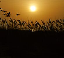 Sunrise through the Seagrass by imagetj