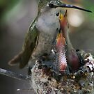 Momma Costa's hummingbird by Bluecornstudios