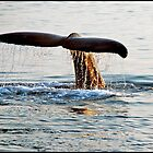 Fluke of a Humpback Alaska by ten2eight