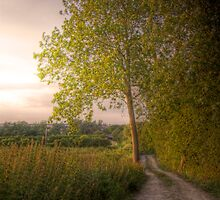 Country Road - Didcot, Oxfordshire, United Kingdom by Mark Richards