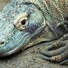 Komodo Dragon by Jessica Dzupina