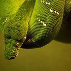 Emerald Tree Boa by Jessica Dzupina