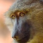 Charming Baboon by Jessica Dzupina