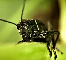 One Big Bug. by Tim Bell