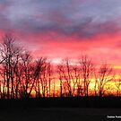Sunset on New Year's Day by Debbie Robbins