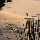 Lilypads at Dusk by welchko