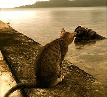 Pondering Puss by Heather-Jayne