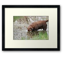 Frog Hunting Strategy Framed Print
