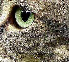 C Is For Cat With SeaGreen Eyes by paintingsheep