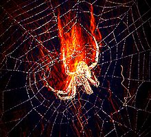 Flaming Arachnid by Lisa Taylor