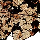 Dead Dry  leaf by AravindTeki