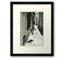 Cat in Arles (France) Framed Print