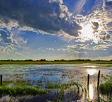Flooded Field In Alberta by Myron Watamaniuk