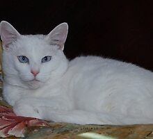 Snowball is such a Princess! by Marjorie Wallace