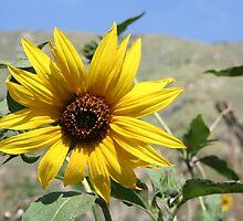 Sunflower by Missy Yoder
