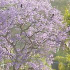 Three Crows Atop A Jacaranda Tree by CissieMayHaines