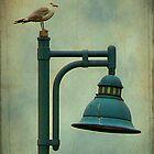 kew beach gull by Lenore Locken