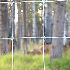Don't Fence Me In by fireplug
