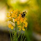 Bees and Bokeh by John  De Bord Photography