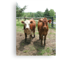 We're Vegetarians, How About You? Canvas Print