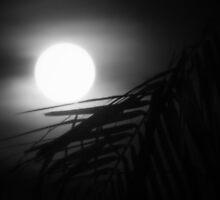 Moonlit Palm by Nancee Rainaud