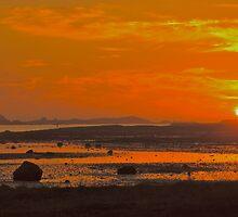 My love   -    N  O  R  W  A  Y . ( Lofoten islands). by Brown Sugar . F*** Favorites: 5 Views: 803 .Thank you friends !!! by © Andrzej Goszcz,M.D. Ph.D